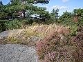 Stensättning, ensamliggande, i Björlanda socken på Hisingen den 31 augusti 2005..JPG