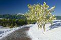 Stessi alberi, ma Lesima a sinistra - panoramio.jpg
