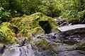 Sumber air batu lumut gunung kerinci 3805mdpl.jpeg
