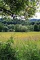 Summer Meadow - geograph.org.uk - 1361956.jpg