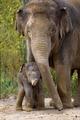 TPH Elefant Temi und Baby2.tif