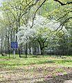 Tabernacle Cemetery 3.jpg