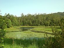 Tallebudgera Creek Dam, Tallebudgera Valley, Queensland.jpg