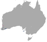 Tammar Wallaby area.png