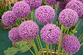 Tatton Park Flower Show 2014 058.jpg