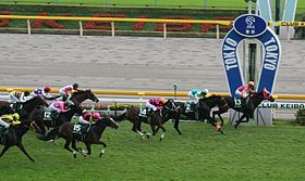 The 58th Fuchu Himba Stakes 20101017R1.jpg