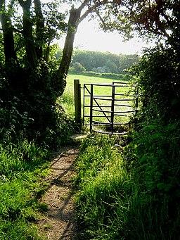 The Ridgeway near Wigginton - geograph.org.uk - 184038