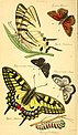 The entomologist's text book - an introduction to the natural history, structure, physiology and classification of insects, including the Crustacea and Arachnida (1838) (14759629126).jpg