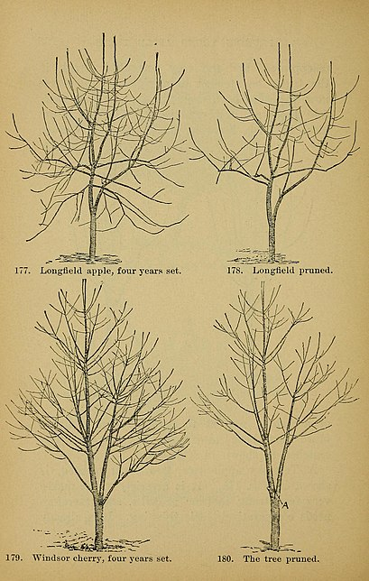 File:The pruning-book. A monograph of the pruning and training of plants as applied to American conditions (1898) (14578915110).jpg