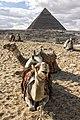 The pyramids of Giza.jpg