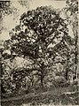 The tree book - A popular guide to a knowledge of the trees of North America and to their uses and cultivation (1920) (14596273679).jpg