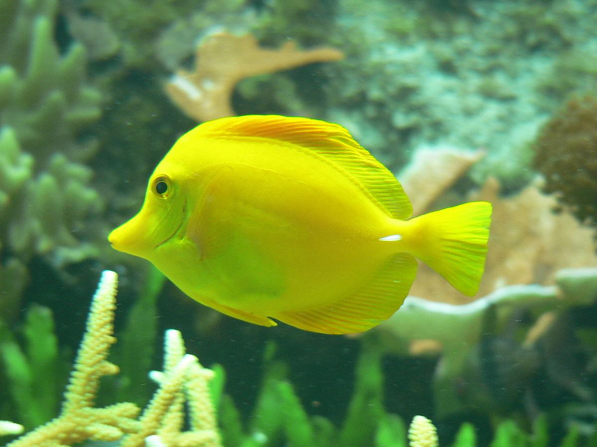 Fisch Wikipedia