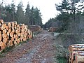 Timber stacks - geograph.org.uk - 164704.jpg