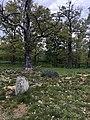 Tjuvbackarna, Kalmar, betesmark med fornlämningar.jpg