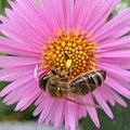 To bee (3989939216).jpg