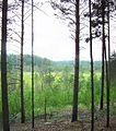 Tomsky District, Tomsk Oblast, Russia - panoramio (126).jpg