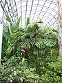 Torre Abbey palm house - geograph.org.uk - 955431.jpg