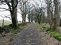 Track at Dam Wood - geograph.org.uk - 1769518.jpg