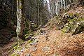 Trail to Black Lake 2.jpg