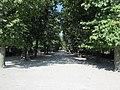 Tree-lined avenue at the Schönbrunn Palace (6363279473).jpg