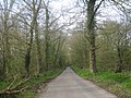Tree Lined Lane - geograph.org.uk - 1803356.jpg