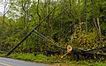 Tree on wires along Ulster Avenue, Walden, NY, following May 2018 derecho.jpg