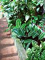 Tropical greenhouse 02.JPG