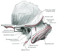Tuberculum articulare ossis temporalis – Wikipédia