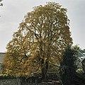 Tuin, kastanje op bruggetje over de Jeker - Maastricht - 20333138 - RCE.jpg