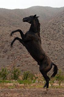 Turkmen Studfarm - Flickr - Kerri-Jo (43).jpg