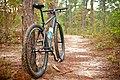 Tuskegee NF Trail.jpg