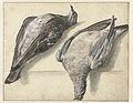 Twee dode duiven.jpeg
