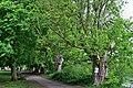 Twickenham, Orleans Gardens, riverside trees.jpg