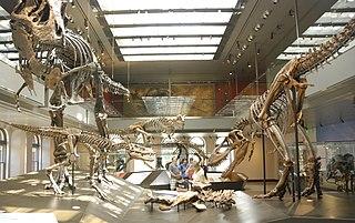Feeding behaviour of <i>Tyrannosaurus</i>