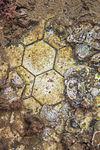 USS Arizona galley floor tiles (2).jpg