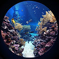 Underwater Observatory Marine Park 4.jpg