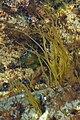 Unidentified - Witless Bay, Newfoundland 2019-08-12 (01).jpg