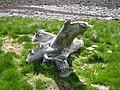 Unusual specimen on Warness Point, Eday - geograph.org.uk - 90842.jpg