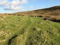 Upland grazing - geograph.org.uk - 680040.jpg
