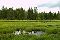 Väiku-Osõtsuu järv 1.jpg