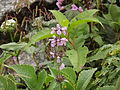 Valley of flowers National Park 15.JPG