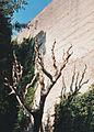 Vatikanischer Garten 03.jpg