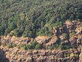 Vegetation at the Echo Point - panoramio.jpg