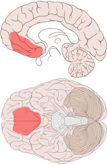 Posthypnotic amnesia - Wikipedia
