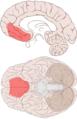 Ventromedial prefrontal cortex.png