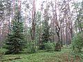 Vievio sen., Lithuania - panoramio (69).jpg