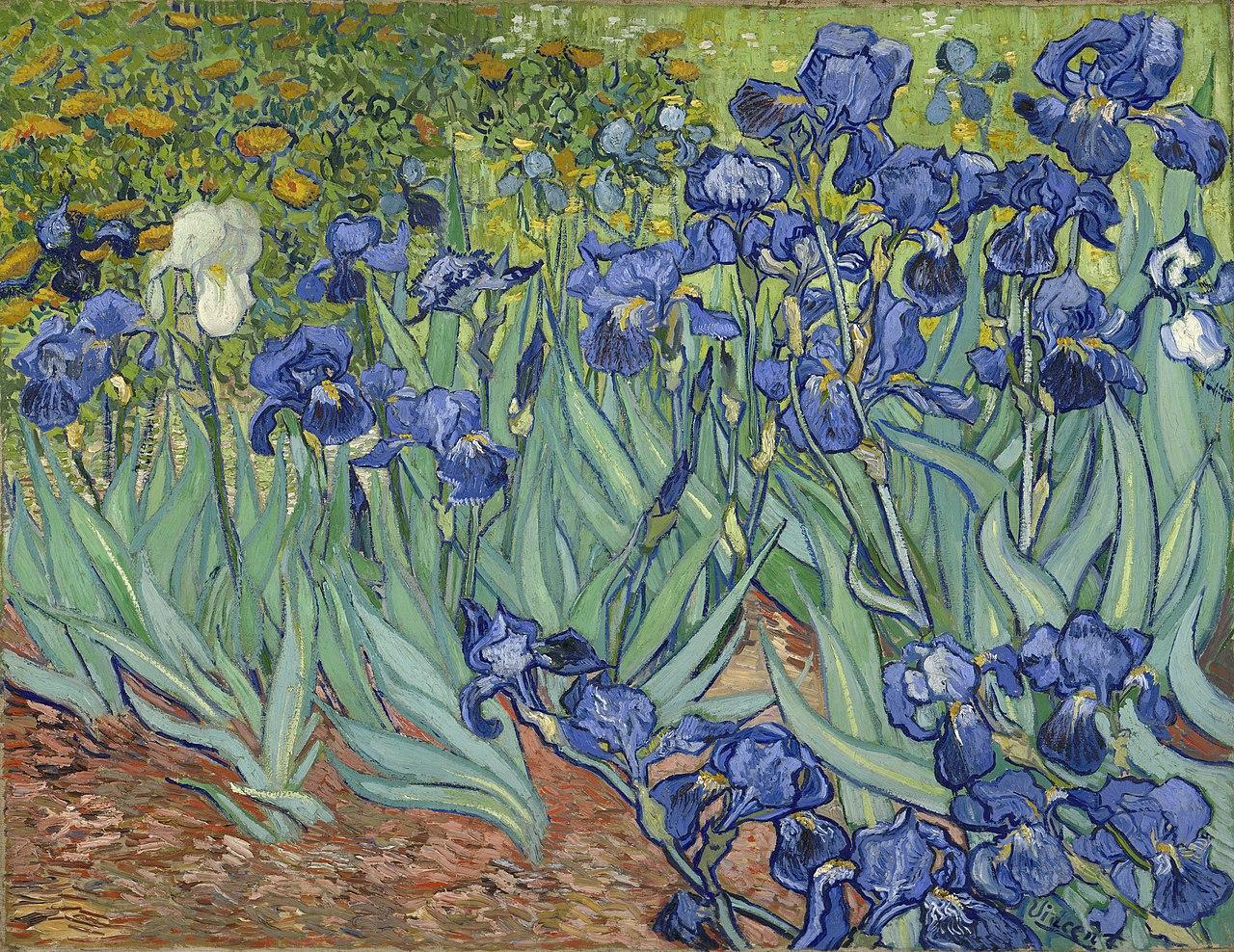 File Vincent Van Gogh Irises 1889 Wikimedia Mons