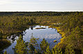 Viru Bog, Parque Nacional Lahemaa, Estonia, 2012-08-12, DD 48.JPG