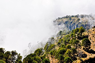 Volcán Tacaná - Forest on the slope of Volcán Tacaná.