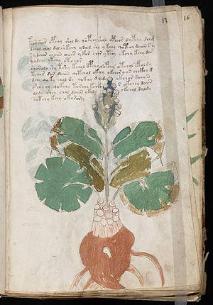 http://upload.wikimedia.org/wikipedia/commons/thumb/c/c8/Voynich_Manuscript_(25).jpg/300px-Voynich_Manuscript_(25).jpg